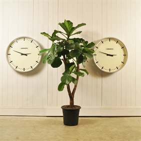 Lepaute Factory Clocks