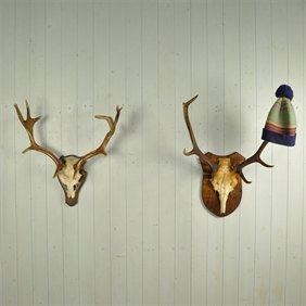 Mounted Antlers