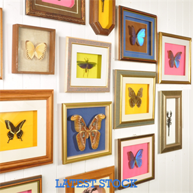 A collection of Vintage Framed Butterflies / Moths