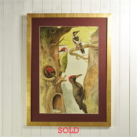 1920's Woodpecker Lithograph