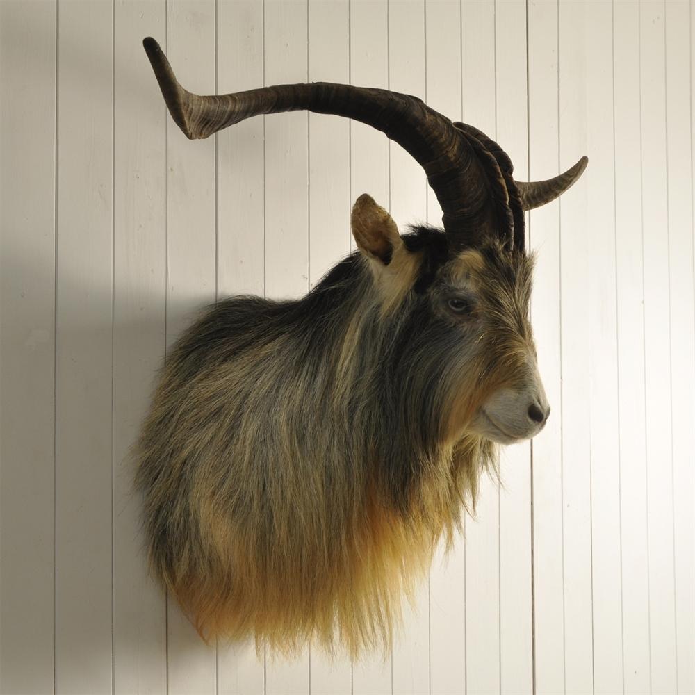 Afghan Goat Shoulder Mount - Original House - Vintage Industrial